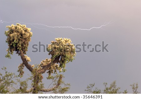 A horizontal lightning strike seen over a Jumping Cholla Cactus, with a well lit subject and background - stock photo