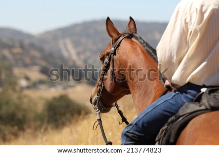 A horse and cowboy gazing off into the distance. - stock photo