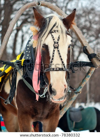 a horse harnessed to a sled to ride in the park - stock photo