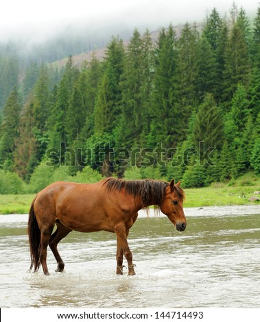 A horse in a river on a background of mountains - stock photo