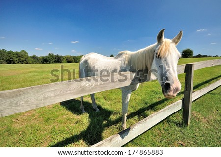 A horse in the field - stock photo