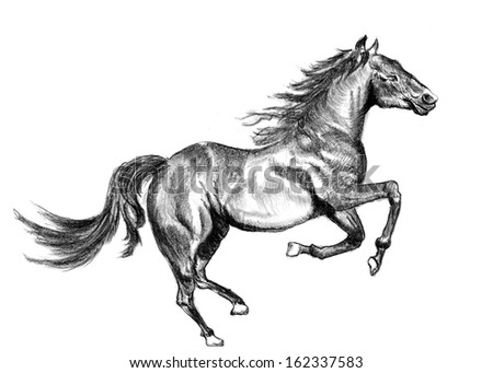 a horse sketch on paper - stock photo