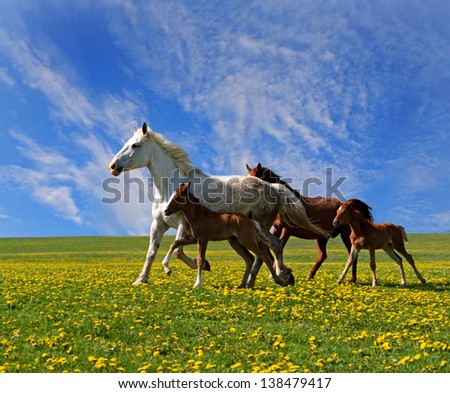 A horse with a foal in the pasture - stock photo