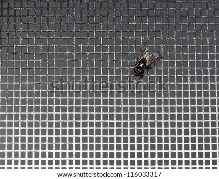 A housefly sits in a window screen - stock photo
