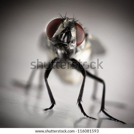 A housefly stuck to fly paper. - stock photo