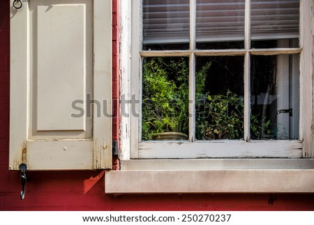A houseplant in the window of this historic Philadelphia home. - stock photo