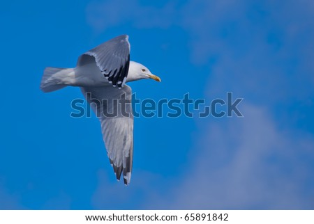 a hovering seagull above the sea in the sky - stock photo