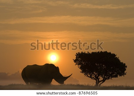A huge rhinoceros standing in sunset aside an African Acacia tree - stock photo