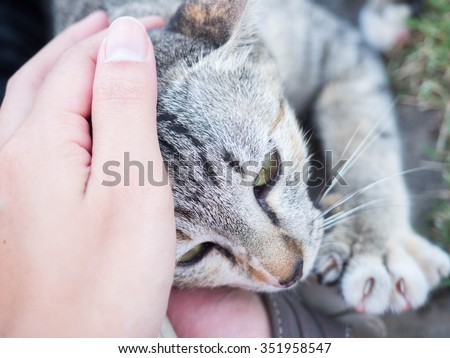 A human hand pat the stray cat face - stock photo