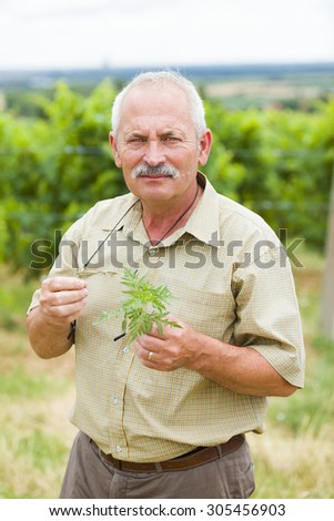 A kind allergist and agrarian taking ragweed samples from fields summing up the danger. - stock photo