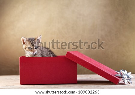 A kitten for present - young cat peeking out of a gift box, copy space - stock photo