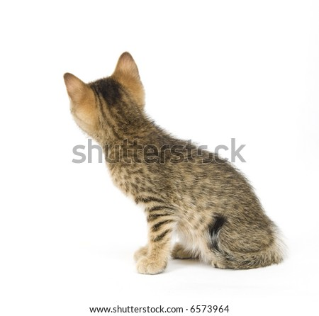 A kitten looks as it it is straining to look around a corner on white background - stock photo