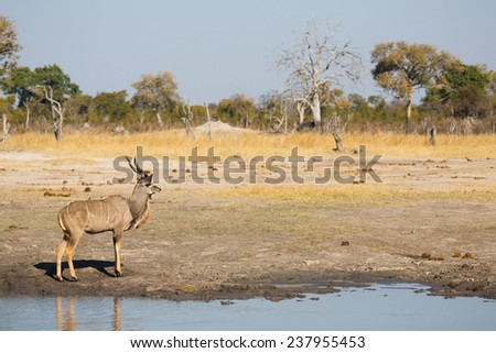 A kudu bull at the water's edge - stock photo