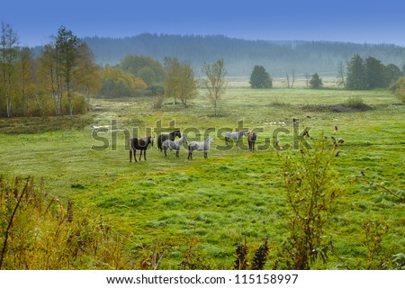 A landscape morning photo - fog - stock photo