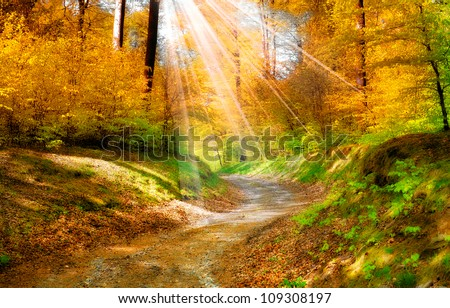 A landscape photo in the colors of autumn - stock photo