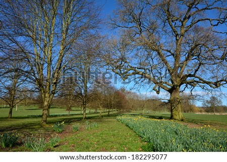 A landscape scene in a park in England. - stock photo