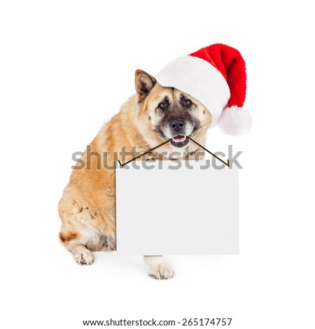 A large Akita dog wearing a red Santa Claus hat sitting and holding a blank sign from his mouth. Enter your own text. - stock photo
