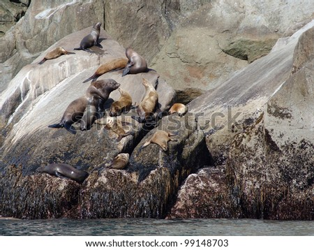 A large Alaskan brown bear fishes for salmon in the rapids of Brooks Falls in Katmai National Park - stock photo