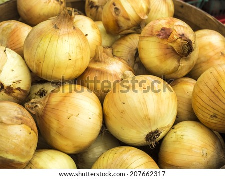 A large basket of just harvest onions at local farm market. - stock photo