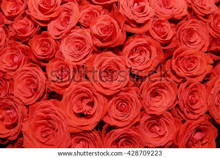 A large bouquet of red roses. Texture of rosebuds. - stock photo