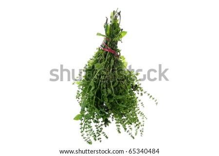 A large bunch of fresh picked home grown sweet basil with beautiful flowers tied with a red ribbon and bow. Isolated on white with room for your text or images - stock photo