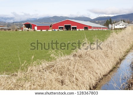 A large cattle barn used for housing livestock/Cattle Barn/A large cattle barn used for keeping livestock - stock photo