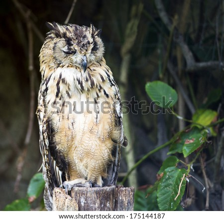 A large eagle owl perched on a tree stump with closed eyes - stock photo