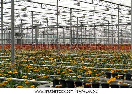 A large greenhouse with a lot of flowers - stock photo