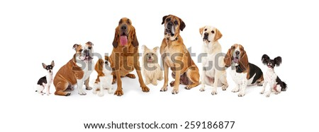 A large group of common dogs of different breeds that are various sizes  - stock photo