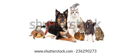 A large group of domestic pets including a dog, cat, bird, guinea pig, pot-bellied pig, sugar glider, bunny, lizard, snake, turtle and frog. Image is sized to fit a social media timeline  - stock photo