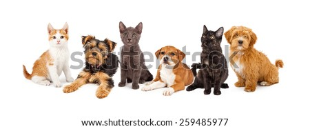 A large group of young kittens and puppies together. Image sized to fit a popular social media timeline cover placeholder - stock photo