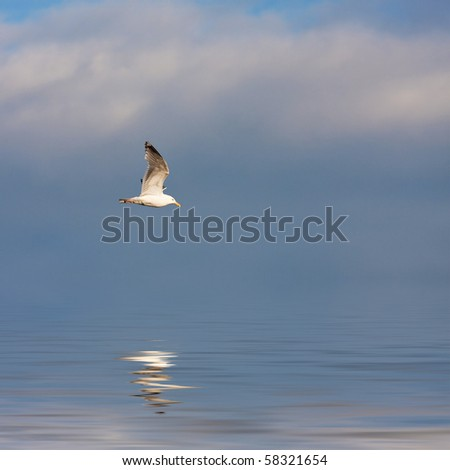 A large seagull flying over a blue sky with a reflection coming off the water. - stock photo