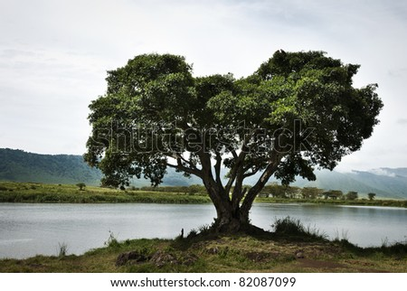 A large single tree on the water's edge of a lake in Tanzania - stock photo