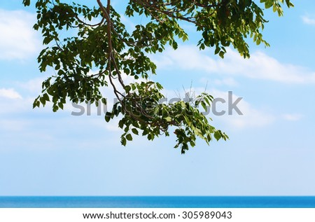 A large tree branch hanging over the water against a blue cloudless sky. Hot summer day at sea. Space for text. - stock photo