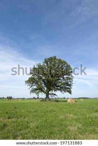 A large tree stands in a field with hay bales. - stock photo