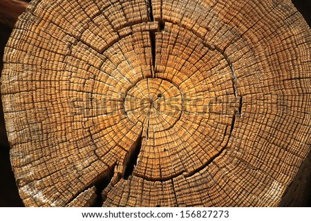 A large tree trunk - stock photo