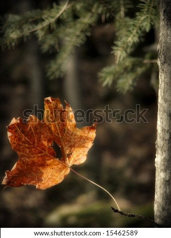 A leaf at fall on a tree. - stock photo