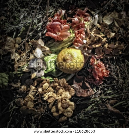 A Lemon Peel and Flowers on a Compost Heap/Artistically alienated to create a grungy somber atmosphere - stock photo