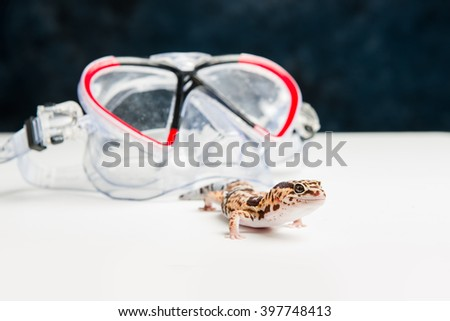 A leopard gecko next to some swimming goggles. - stock photo
