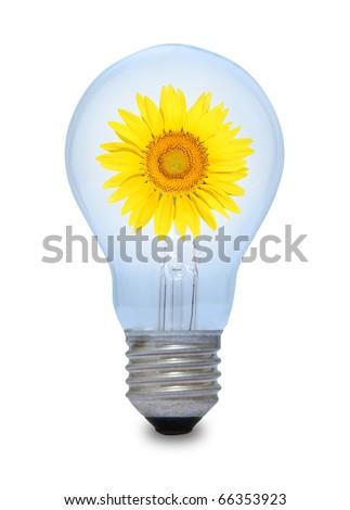 A light bulb with sunflower inside. - stock photo