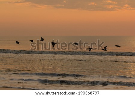 A line of pelicans flying over the Atlantic Ocean at dawn.  Anastasia State Park, St. Augustine, FL, USA. - stock photo
