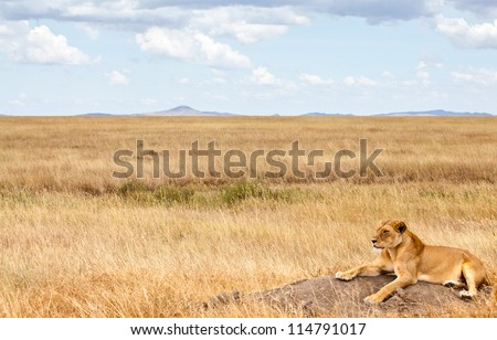 A lioness scans the Savannah for her next meal. Serengeti National Park, Tanzania - stock photo
