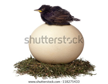 A little bird sits in vain on a large egg waiting for it to hatch. It is a futile exercise. - stock photo