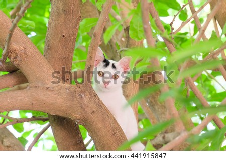 a little cat clamber on the tree - stock photo