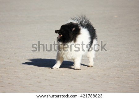 A little dog - stock photo