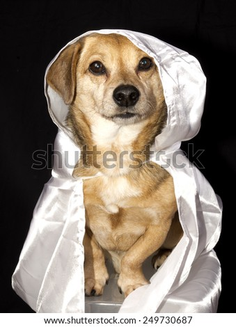 a little ghost dog - stock photo