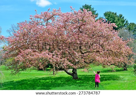 A little girl enjoying the wonder of springtime as she reaches out to touch a flower from a majestic crabapple tree at Dawes Arboretum, - stock photo