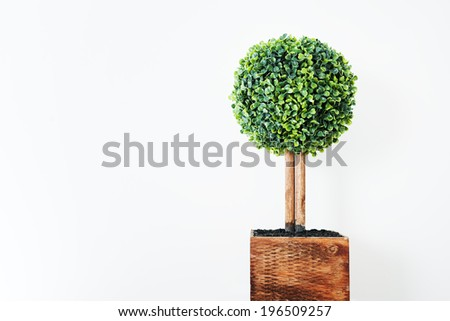 A little green leafy tree in a brown pot. - stock photo