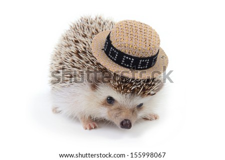 A little hedgehog wearing small hat on white background. - stock photo