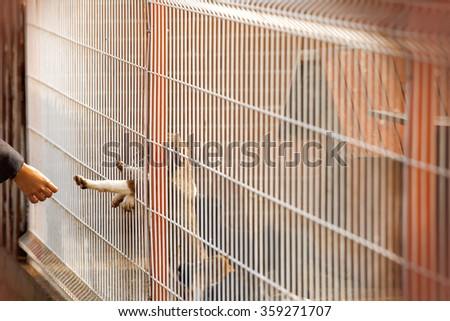 A little homeless puppy behind bars in a shelter is reaching out to touch a human hand. - stock photo